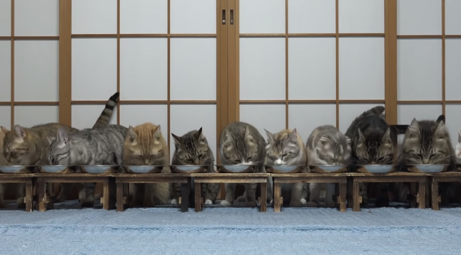 食事中にビックリして一斉に逃げ出す猫ちゃんたち( ゚Д゚)‼‼