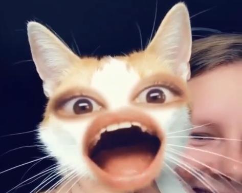 猫と人間で「顔入れ替えアプリ」を使ったらとんでもないことに(笑)