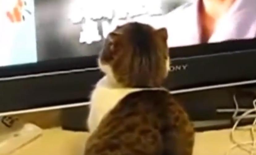 ただテレビを見てるだけかと思った、次の瞬間👀‼‼(笑)