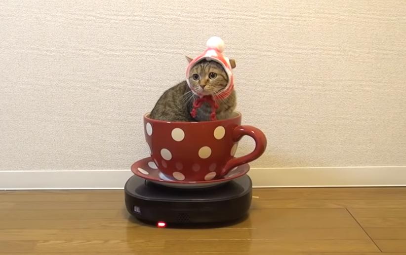 ニャンニャンランド開園🎡✨コーヒーカップで遊ぶ猫ちゃん🐱