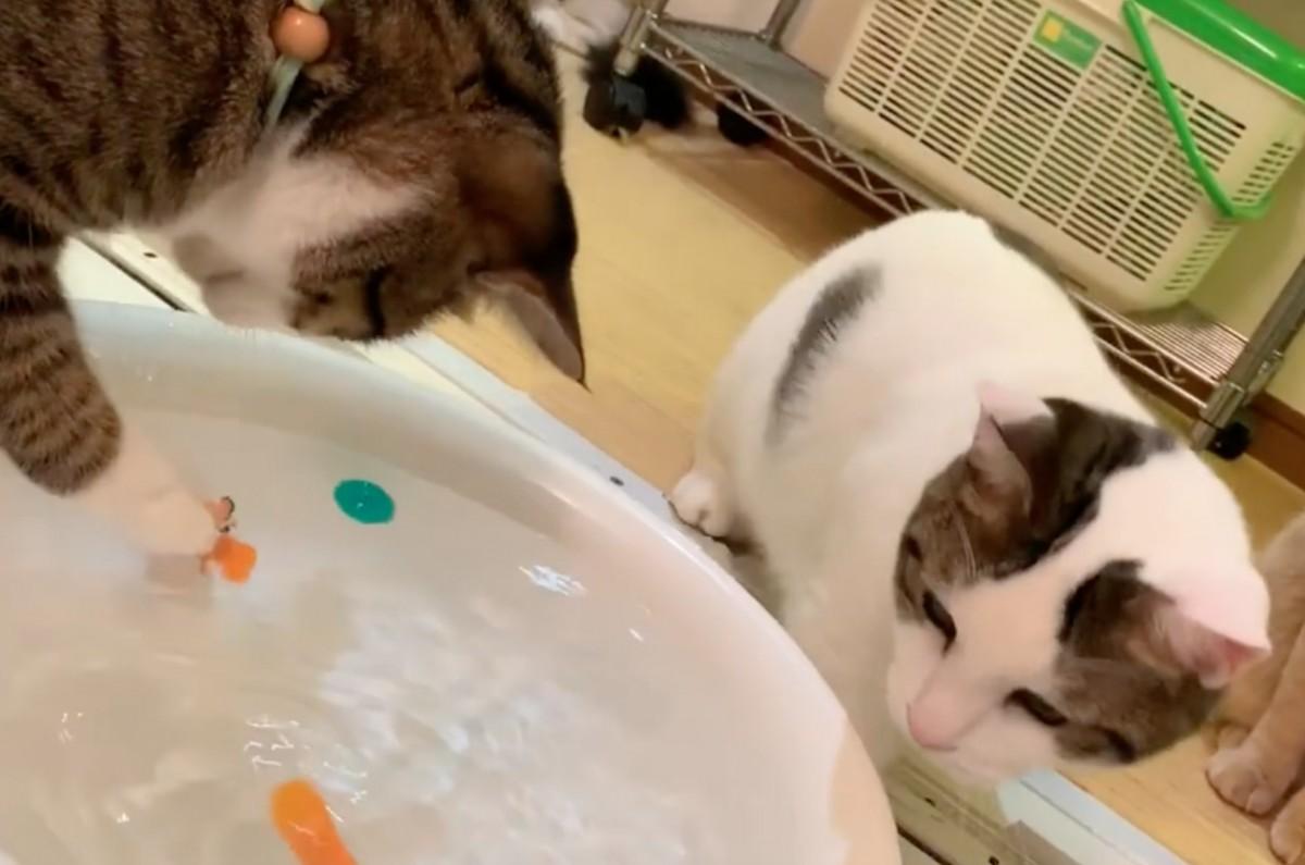 ネコちゃんはお魚ロボットを捕まえるのか!?