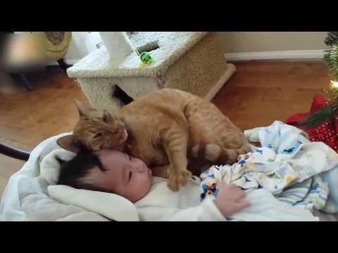 逆!逆!!(๑ↀᆺↀ๑)ネコの方が甘えてるよ〜♡