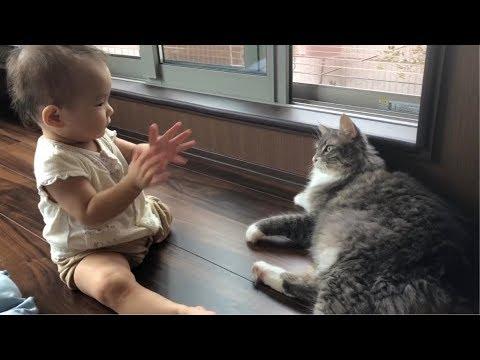 猫って子供嫌いだけど何故か赤ちゃんには優しいですよね(=^ェ^=)
