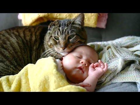 人間の子供を自分の子供のように守るネコちゃんが優秀すぎます♡