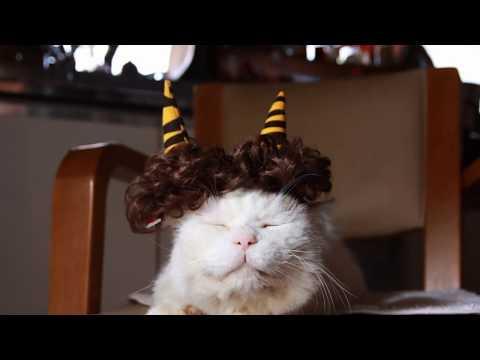 ネコちゃんにだって節分はあるんだニャー❗️鬼に変身した姿も可愛いです♡