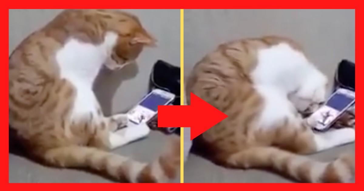 スマホに映る今は亡きご主人の姿を見た猫が反応した行動に「心がホッと」暖められる…