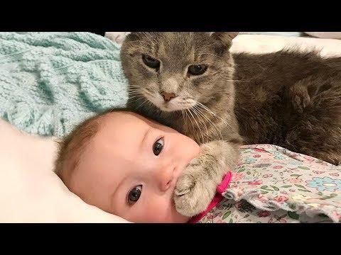 赤ちゃんとネコちゃんのやりとりが終始可愛すぎる(๑>◡<๑)