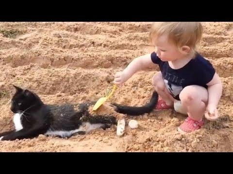ネコと子供たちの終わらない戦いが始まります(₌චᆽච₌)
