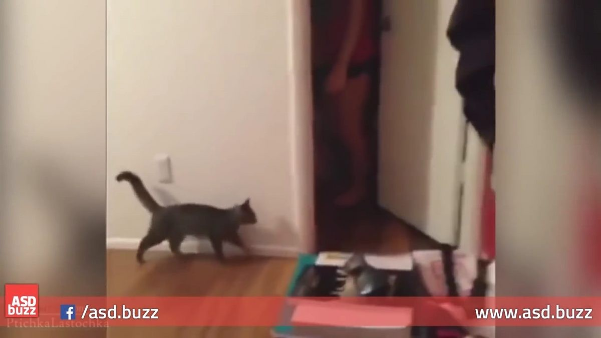 ネコ「なんか気配がする…」この後ネコの驚きように思わず吹いてしまう(笑)