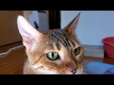 「こら!ダメ!」ネコちゃんの怒られてから拗ねていくまでの過程が面白いw