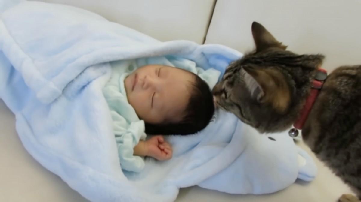 『焦らなくても赤ちゃんは逃げないよ (=`ェ´=)』興味津々なネコちゃんたち♡