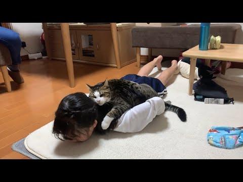 甘えた上手なネコちゃんだニャ〜(=^x^=)