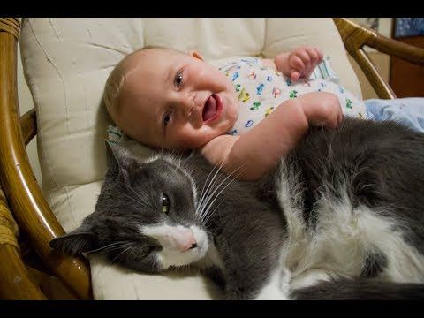 ネコ『赤ちゃんをイジメるモノは許さない』信頼関係が厚くて微笑ましいです♡