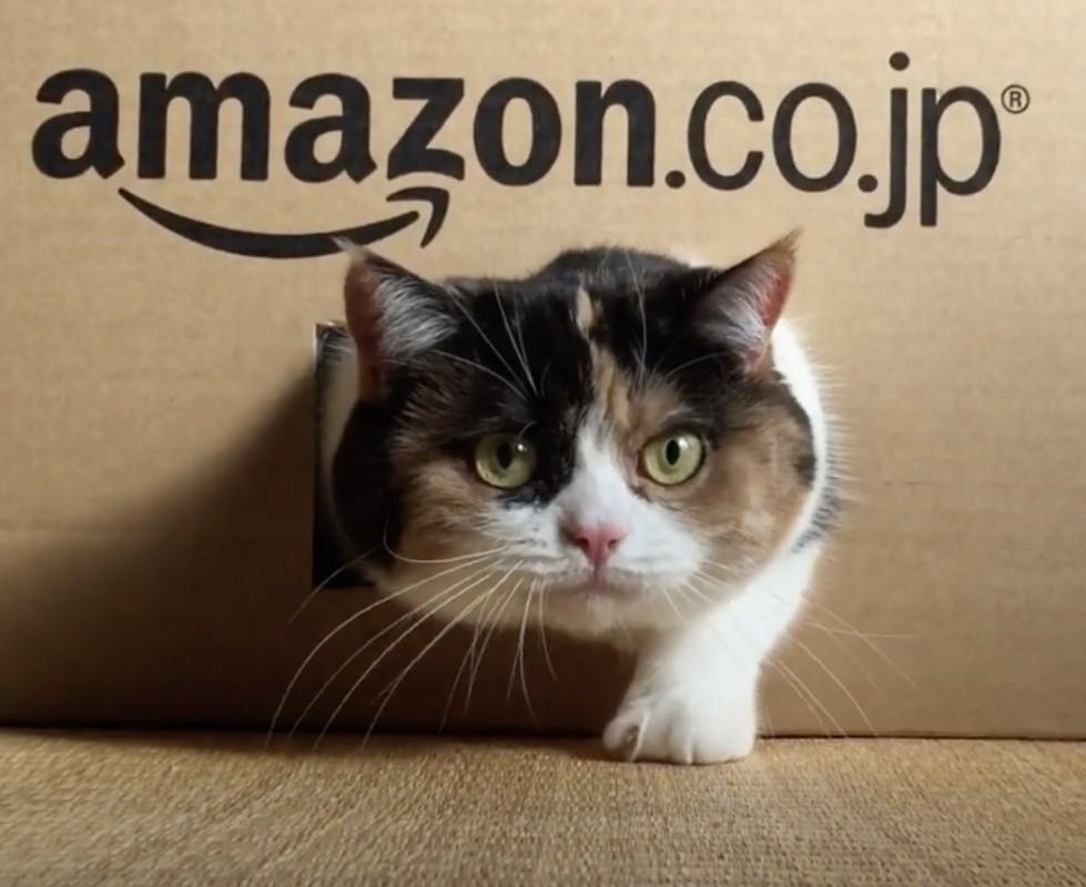 Amazonで猫が届きました😹😹