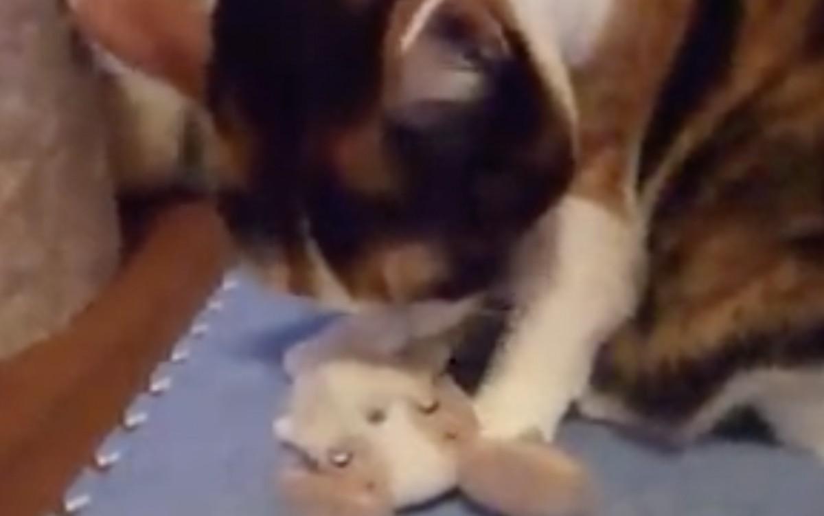 溢れる母性愛。ぬいぐるみを我が子のように連れ歩く猫さん。