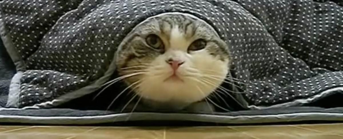 超有名猫ちゃん『まる』の総集編動画♡