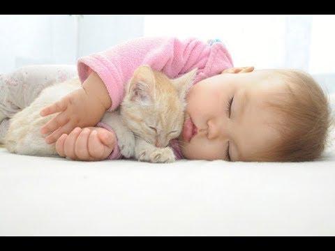 どちらも快適そうに寝ていて癒されるにゃ〜