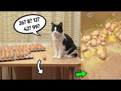 100個の卵を割るまで帰れまてん❗️