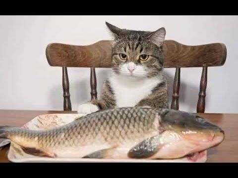 猫の可愛さを凝縮した動画たちです😻