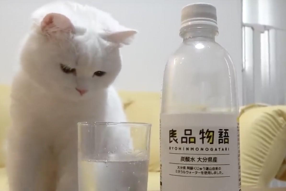 シュワシュワを見るとついつい手を突っ込んじゃう猫さん!