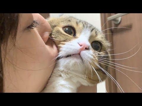 ネコ「かなり恐怖を感じた…」