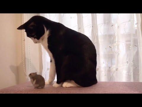 無邪気なハムスターと優しい猫ちゃん😻