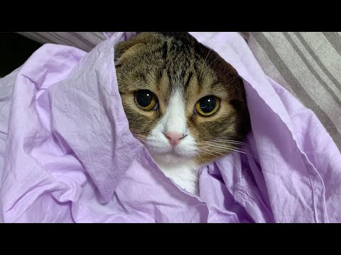 スカートに包まれてうっとりな、ぽこ太郎です?