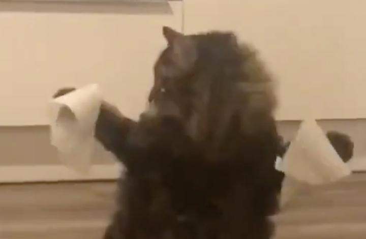 猫ちゃんホイホイ♪