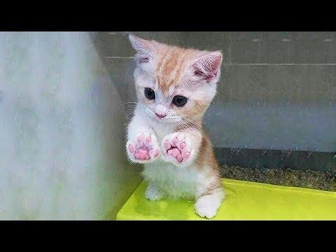 子猫たちが一同に集結!猫ちゃんに癒されること間違いなし!