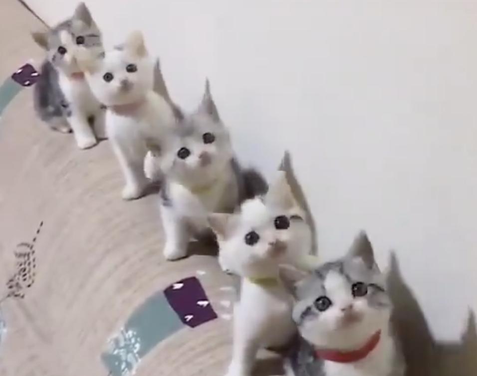 猫の可愛さ面白さが詰まった5選