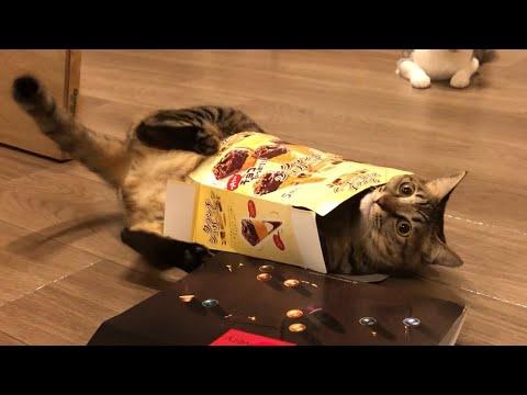 猫「あれ?抜けない!何で?何で?? ま、いっか」