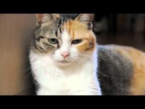 壁に寄りかかろうとして失敗した猫の表情がかわいくてたまりません(*´ω`*)